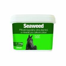 Seaweed mořské řasy